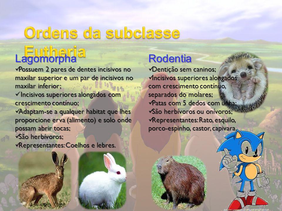 Ordens da subclasse Eutheria