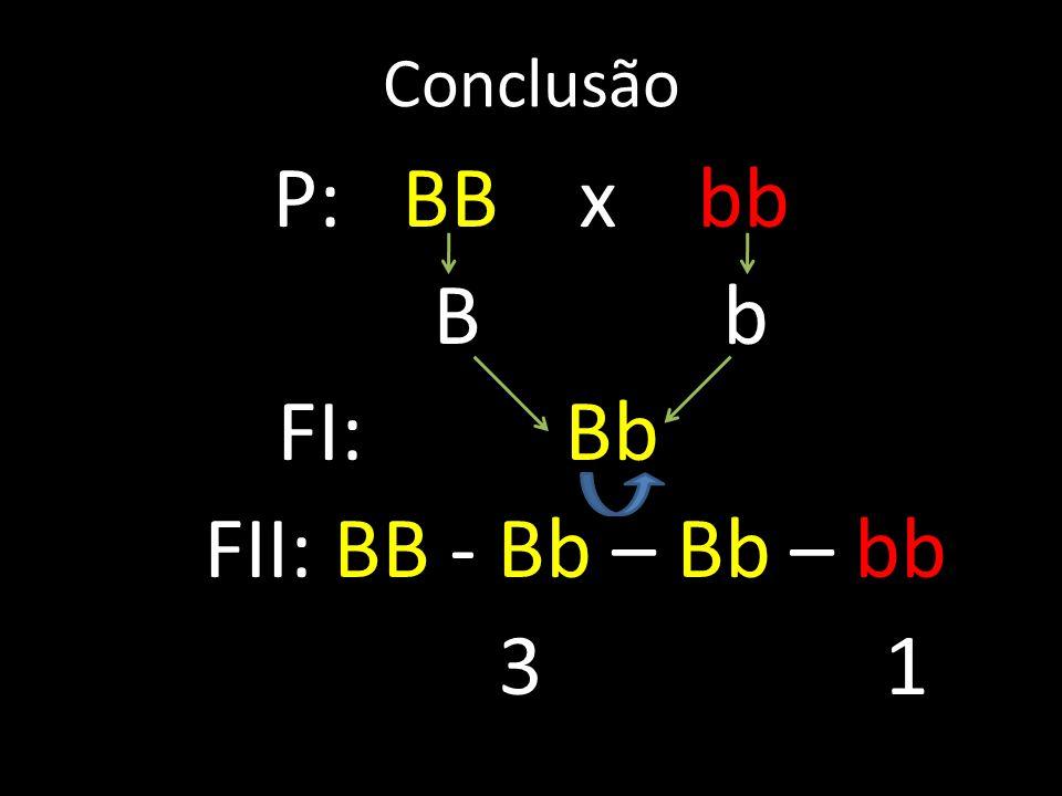 P: BB x bb B b FI: Bb FII: BB - Bb – Bb – bb 3 1