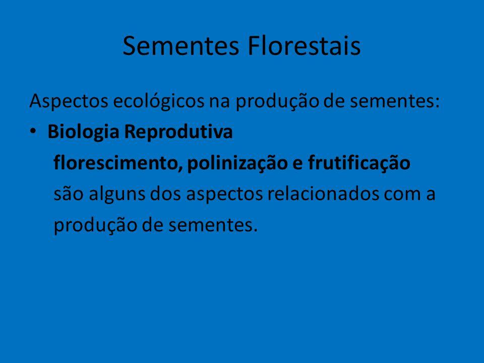 Sementes Florestais Aspectos ecológicos na produção de sementes: