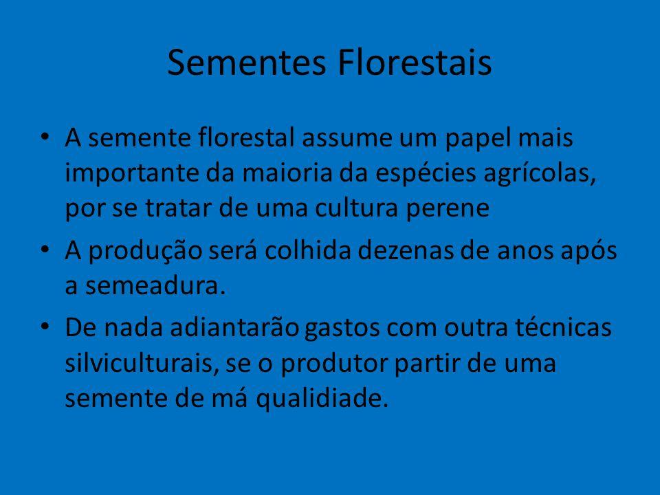 Sementes Florestais A semente florestal assume um papel mais importante da maioria da espécies agrícolas, por se tratar de uma cultura perene.