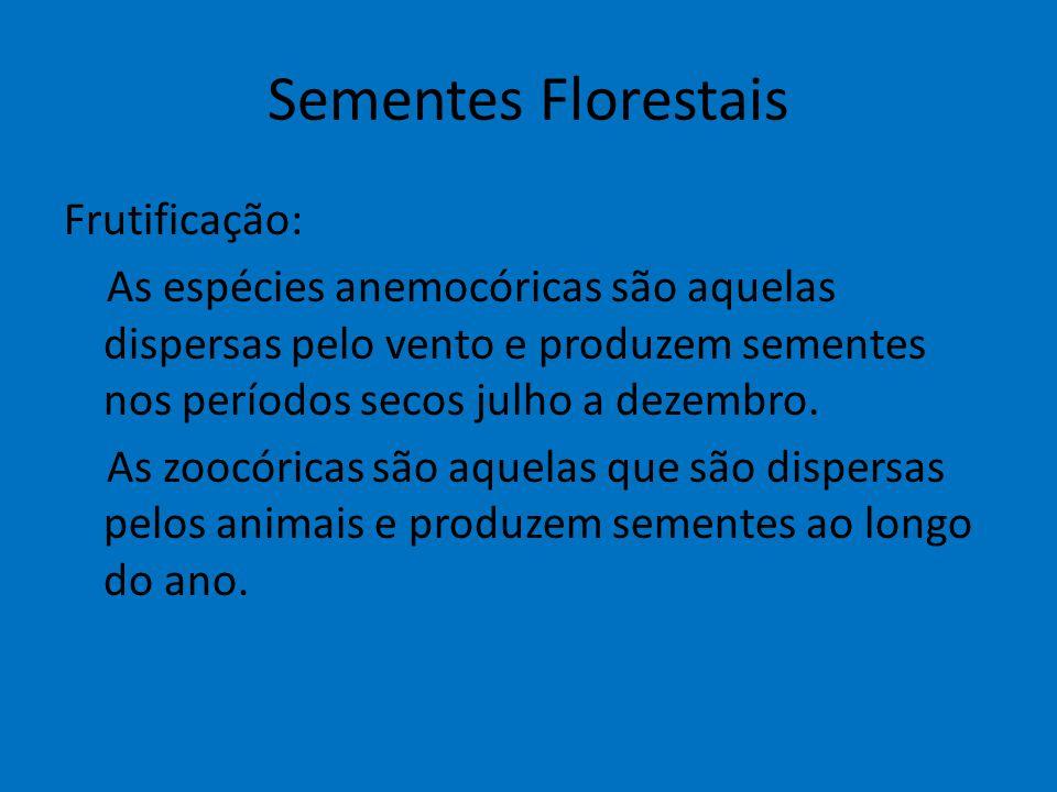 Sementes Florestais Frutificação: