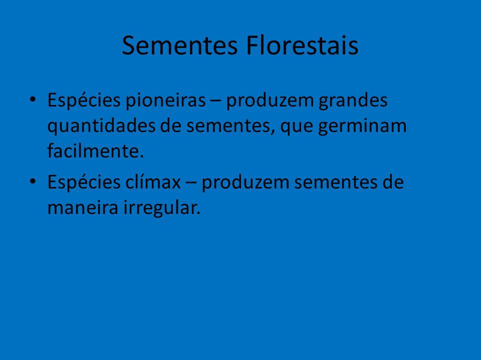 Sementes Florestais Espécies pioneiras – produzem grandes quantidades de sementes, que germinam facilmente.