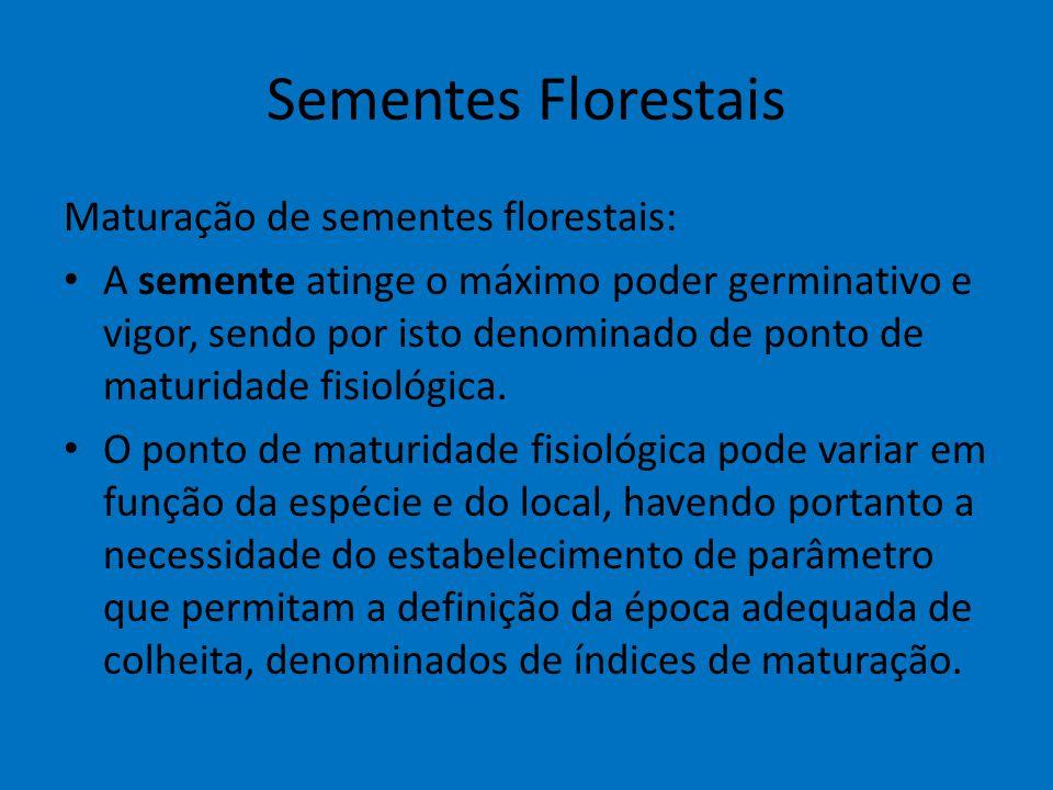 Sementes Florestais Maturação de sementes florestais: