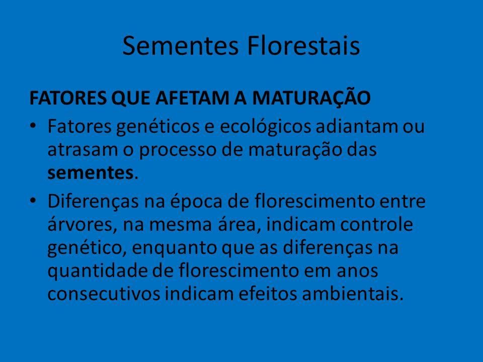 Sementes Florestais FATORES QUE AFETAM A MATURAÇÃO