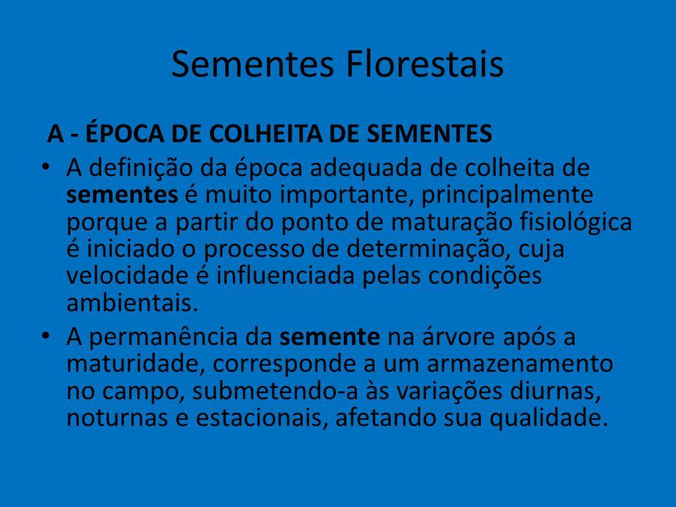 Sementes Florestais A - ÉPOCA DE COLHEITA DE SEMENTES