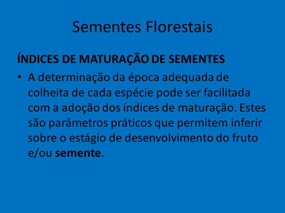 Sementes Florestais ÍNDICES DE MATURAÇÃO DE SEMENTES