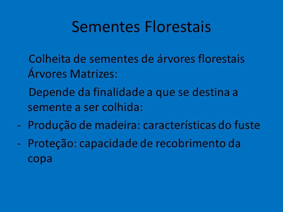 Sementes Florestais Colheita de sementes de árvores florestais Árvores Matrizes: Depende da finalidade a que se destina a semente a ser colhida: