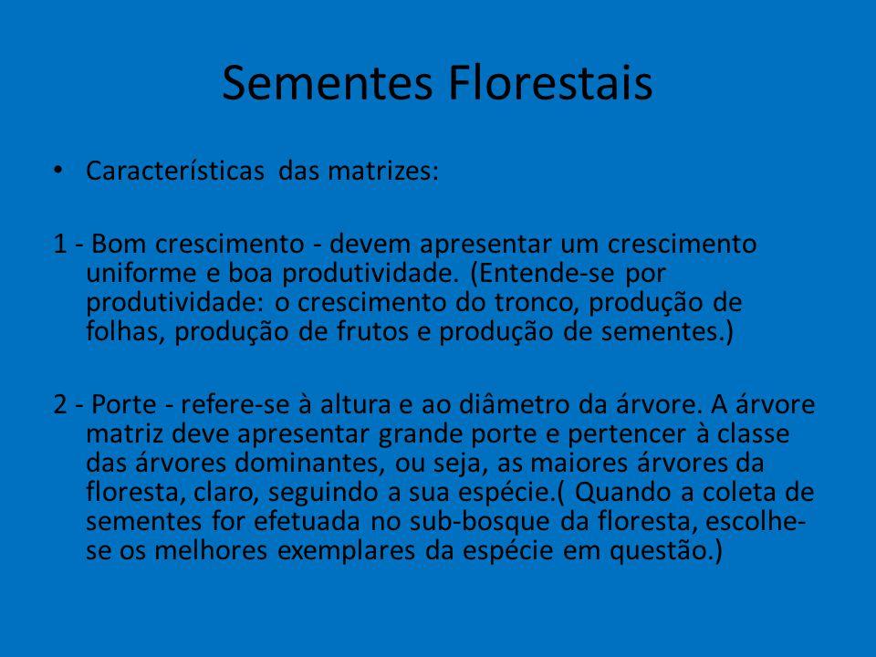 Sementes Florestais Características das matrizes: