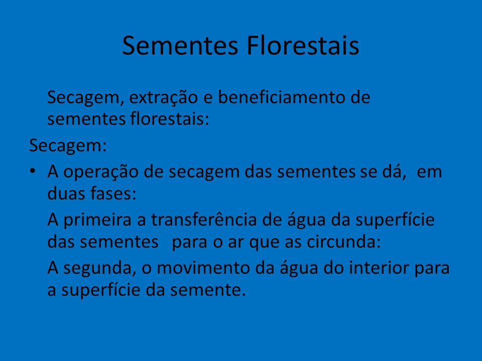 Sementes Florestais Secagem, extração e beneficiamento de sementes florestais: Secagem: A operação de secagem das sementes se dá, em duas fases: