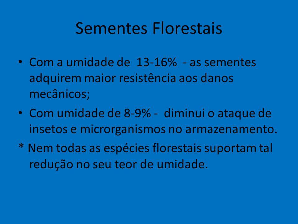 Sementes Florestais Com a umidade de 13-16% - as sementes adquirem maior resistência aos danos mecânicos;