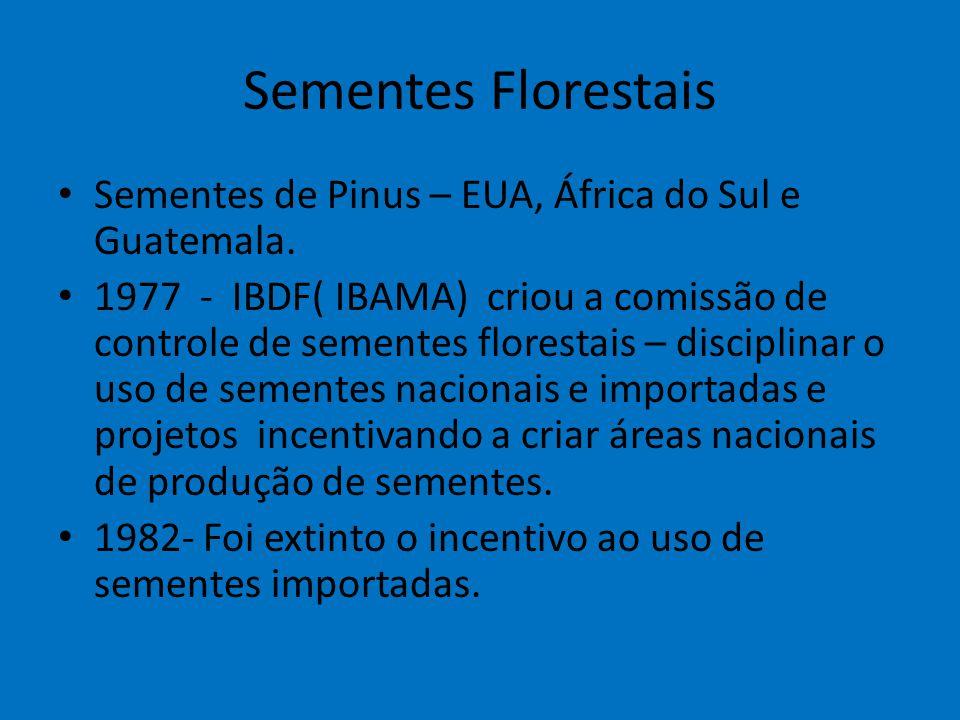Sementes Florestais Sementes de Pinus – EUA, África do Sul e Guatemala.