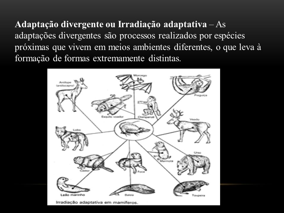 Adaptação divergente ou Irradiação adaptativa – As adaptações divergentes são processos realizados por espécies próximas que vivem em meios ambientes diferentes, o que leva à formação de formas extremamente distintas.