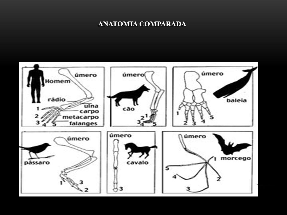 ANATOMIA COMPARADA