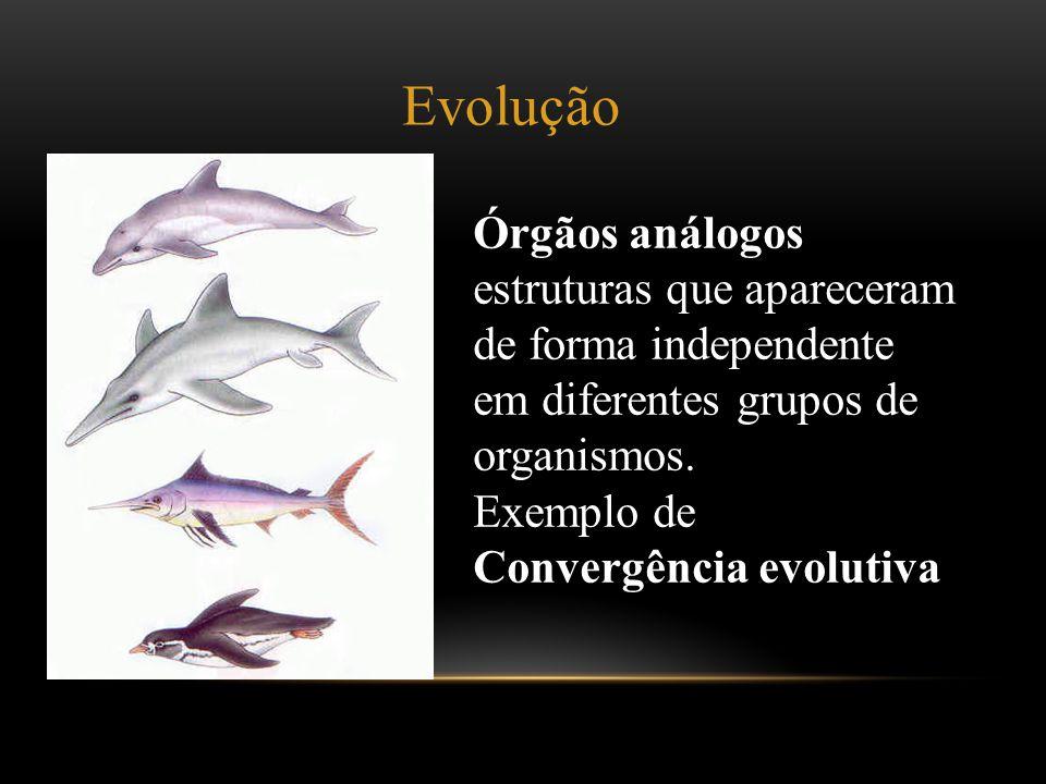 Evolução Órgãos análogos estruturas que apareceram de forma independente em diferentes grupos de organismos.