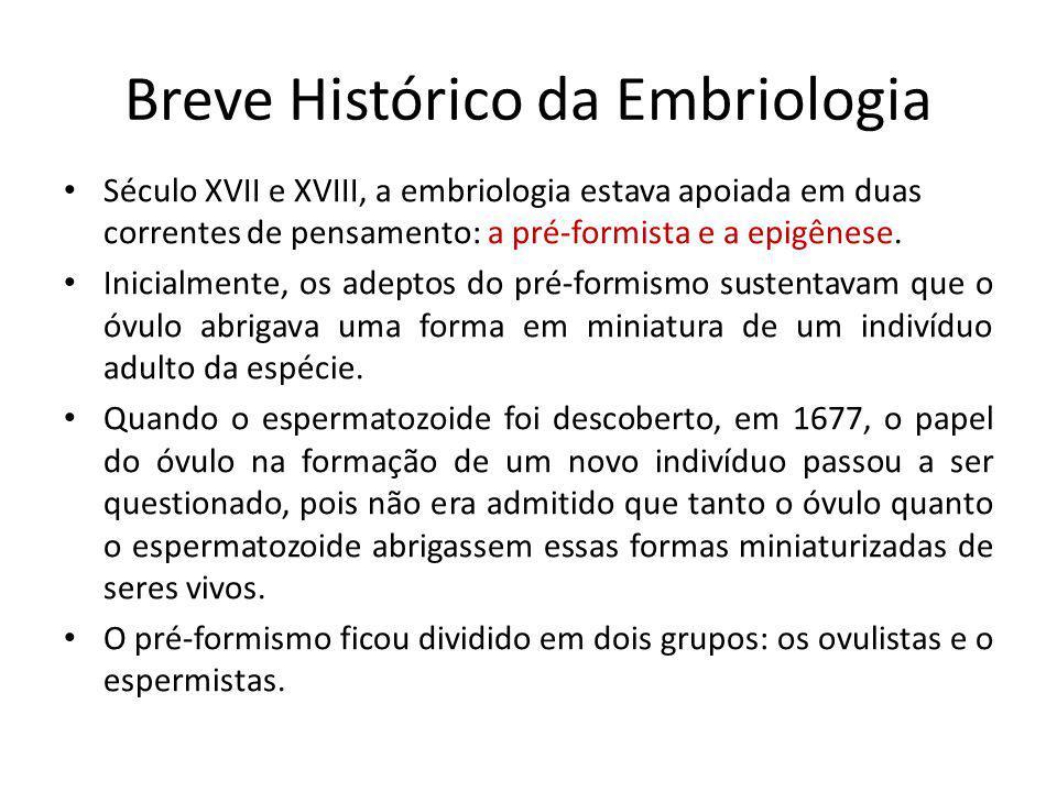 Breve Histórico da Embriologia