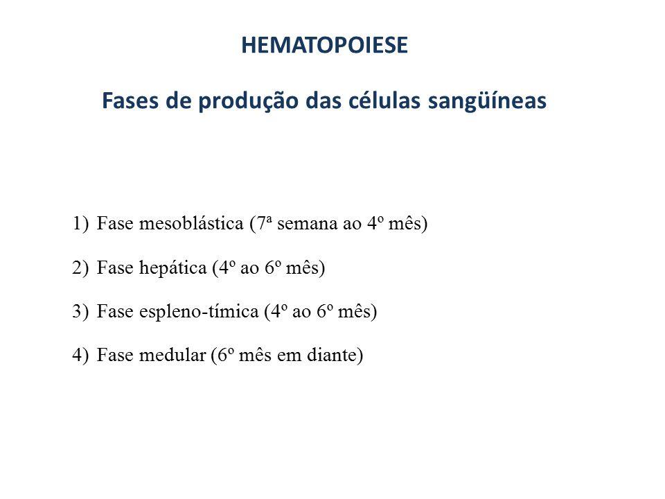 Fases de produção das células sangüíneas