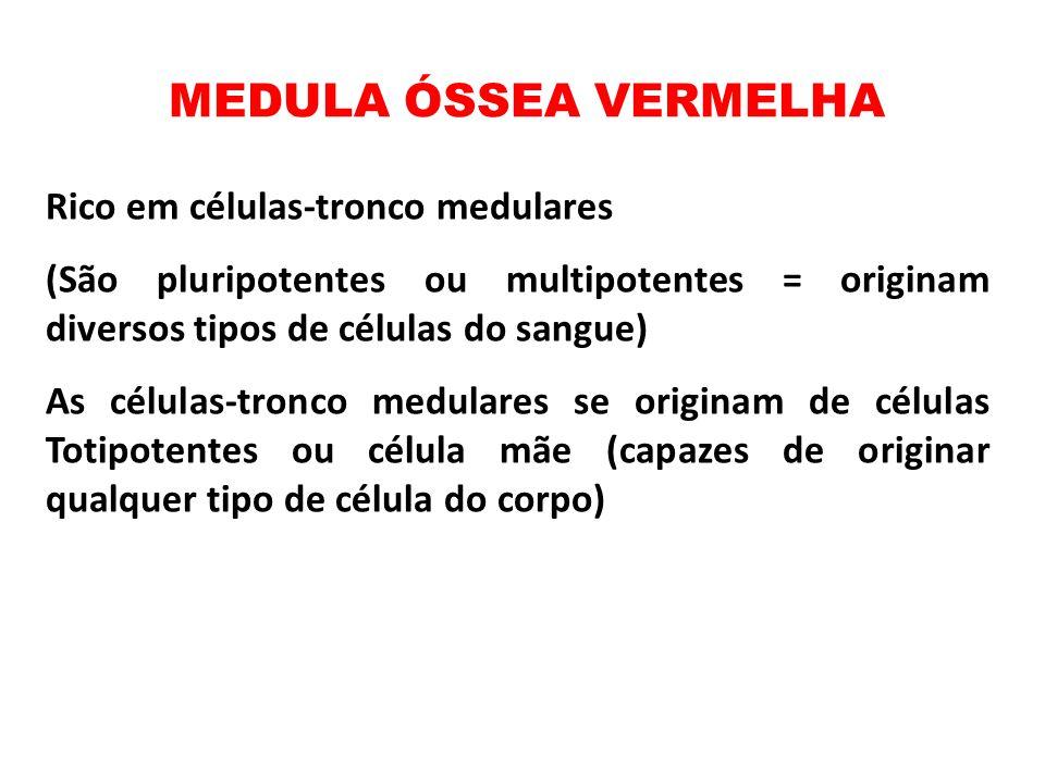 MEDULA ÓSSEA VERMELHA Rico em células-tronco medulares