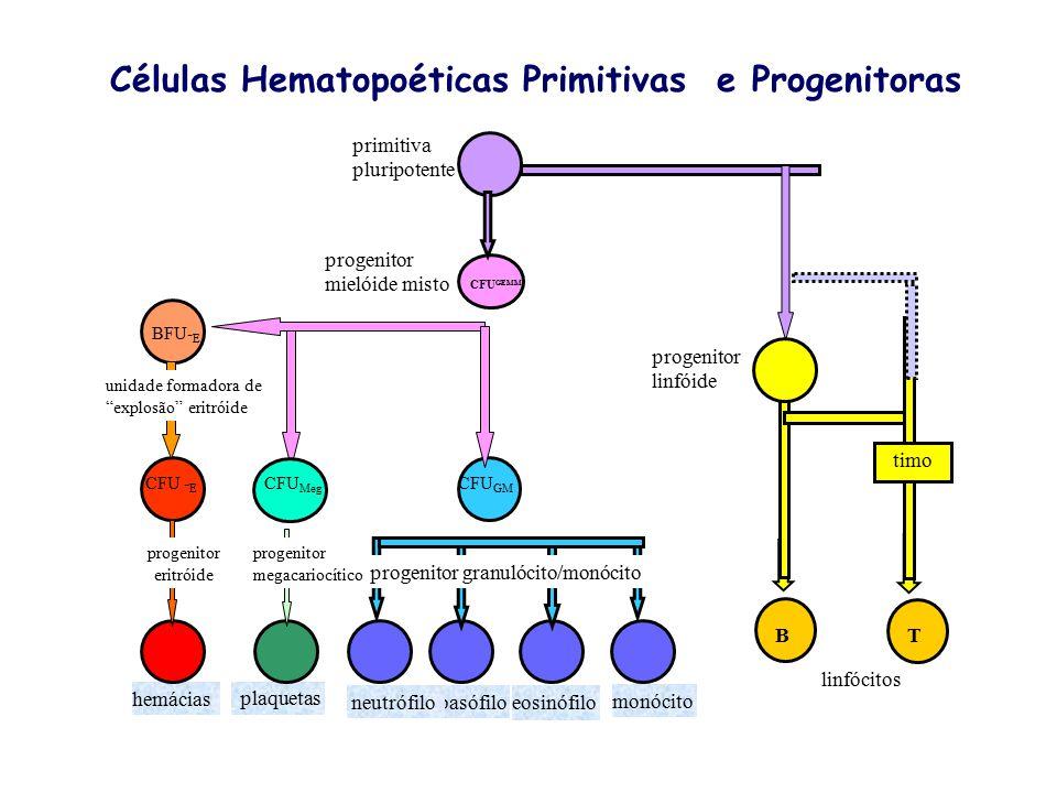 Células Hematopoéticas Primitivas e Progenitoras