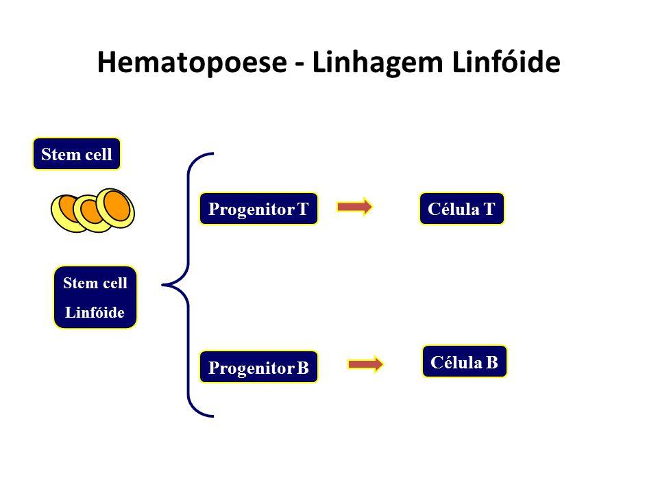 Hematopoese - Linhagem Linfóide