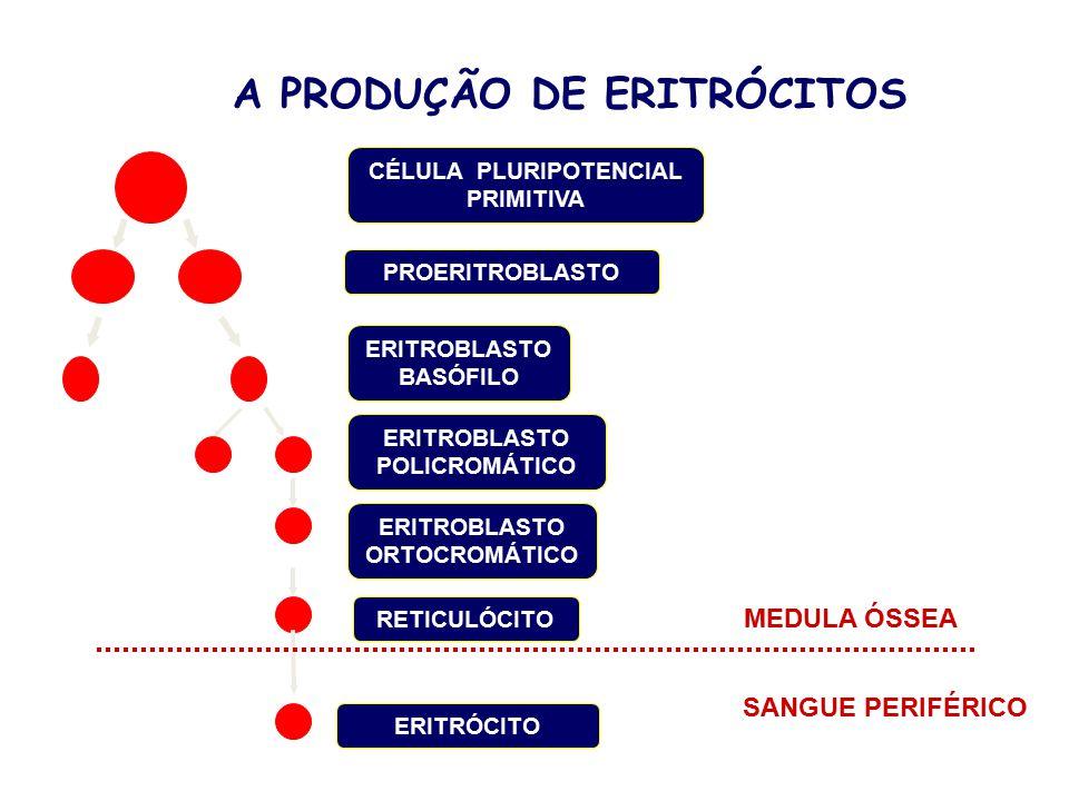 A PRODUÇÃO DE ERITRÓCITOS