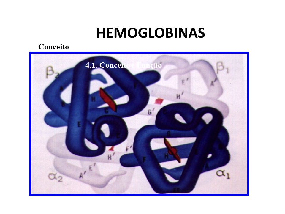 HEMOGLOBINAS Conceito 4.1. Conceito e Função
