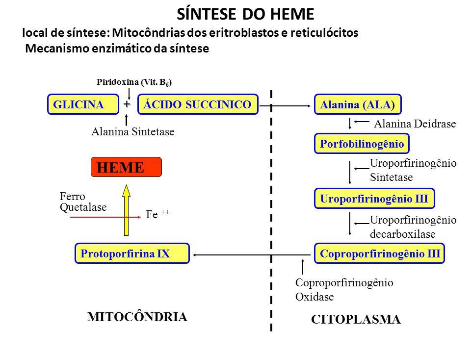 SÍNTESE DO HEME local de síntese: Mitocôndrias dos eritroblastos e reticulócitos. Mecanismo enzimático da síntese.