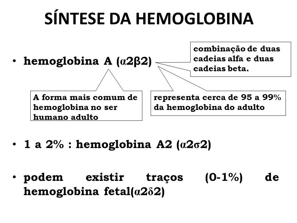 SÍNTESE DA HEMOGLOBINA
