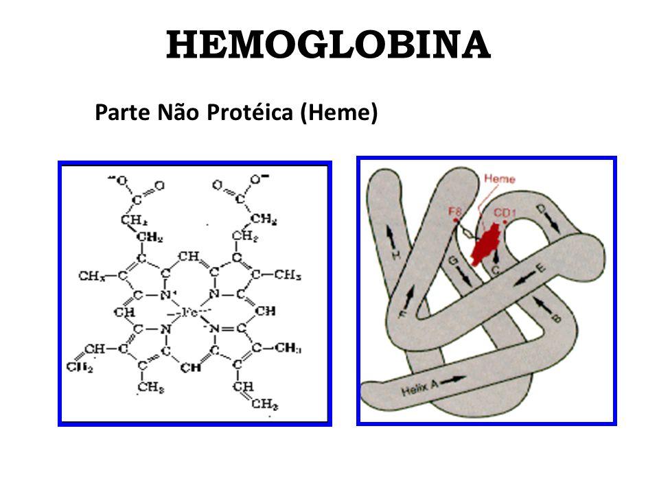 HEMOGLOBINA Parte Não Protéica (Heme) A) Composição