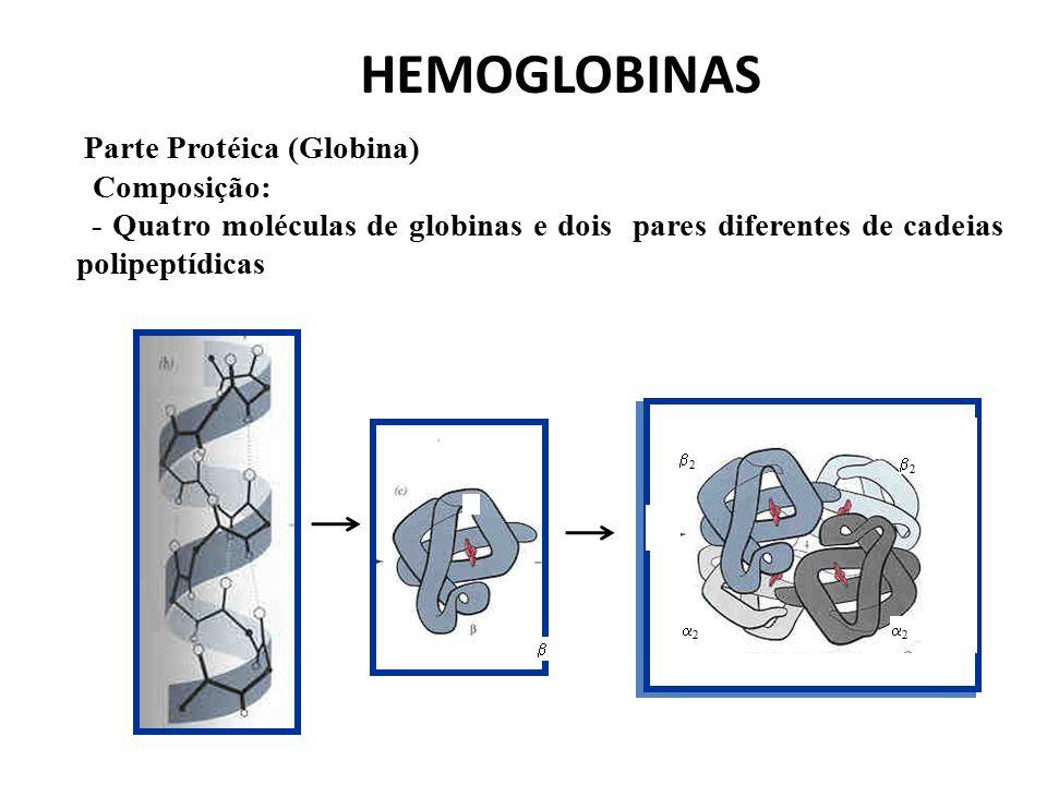 HEMOGLOBINAS Parte Protéica (Globina) Composição: