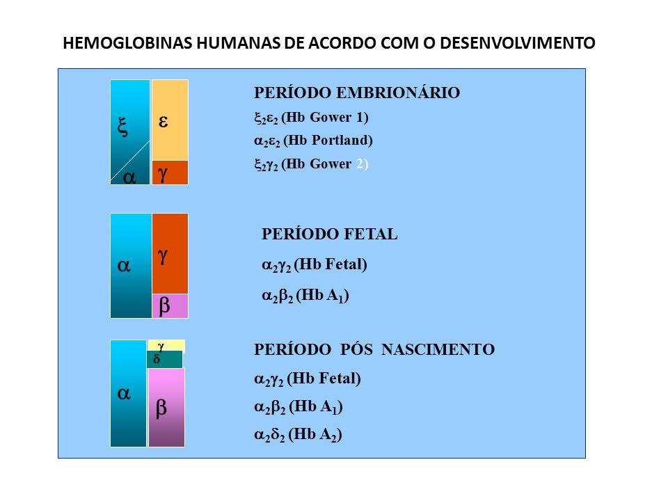 HEMOGLOBINAS HUMANAS DE ACORDO COM O DESENVOLVIMENTO