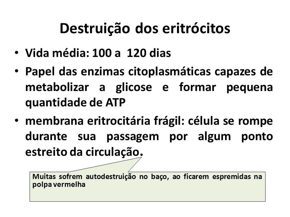 Destruição dos eritrócitos