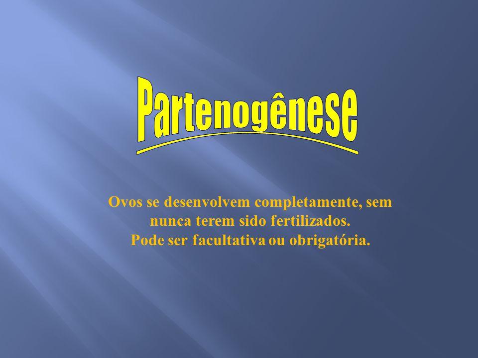 Partenogênese Ovos se desenvolvem completamente, sem nunca terem sido fertilizados. Pode ser facultativa ou obrigatória.