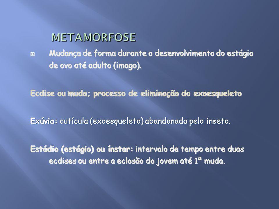 METAMORFOSE Mudança de forma durante o desenvolvimento do estágio de ovo até adulto (imago). Ecdise ou muda; processo de eliminação do exoesqueleto.