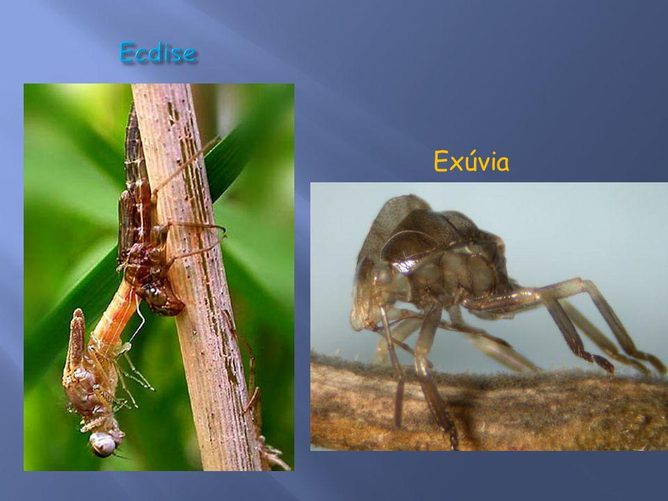Ecdise Exúvia