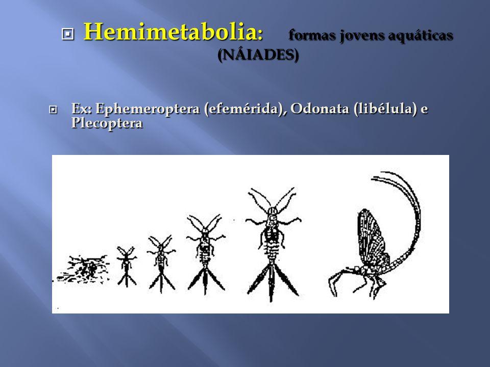 Hemimetabolia: formas jovens aquáticas