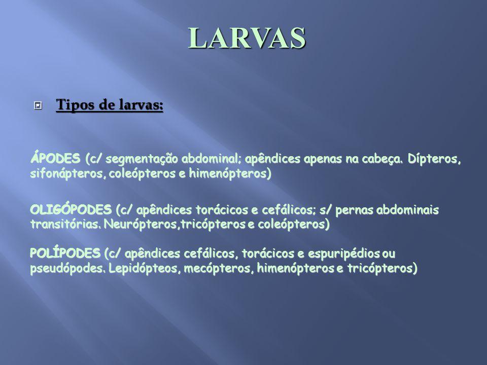 LARVAS Tipos de larvas: