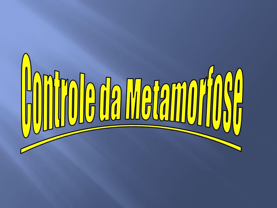Controle da Metamorfose