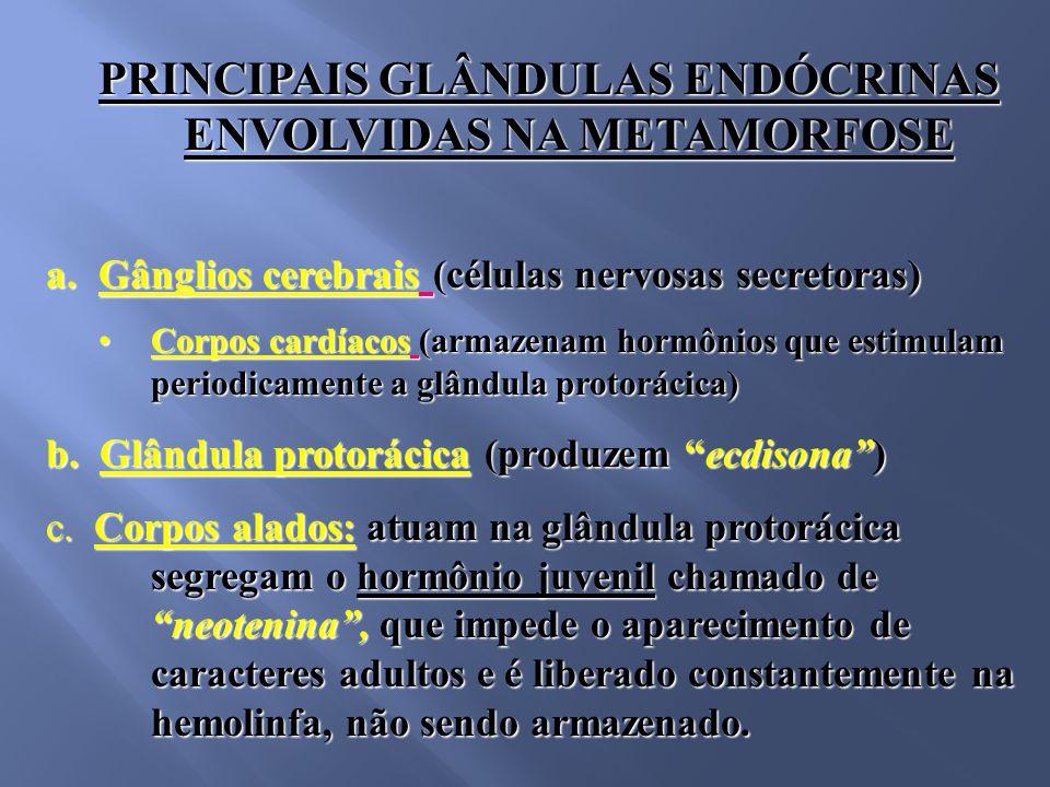 PRINCIPAIS GLÂNDULAS ENDÓCRINAS ENVOLVIDAS NA METAMORFOSE