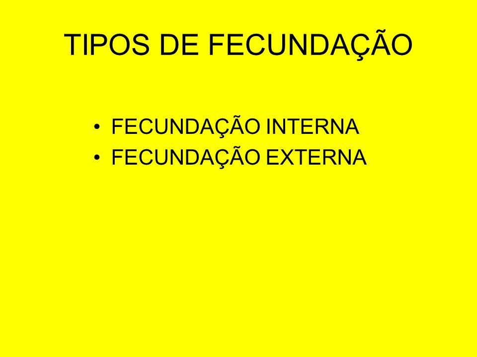 TIPOS DE FECUNDAÇÃO FECUNDAÇÃO INTERNA FECUNDAÇÃO EXTERNA