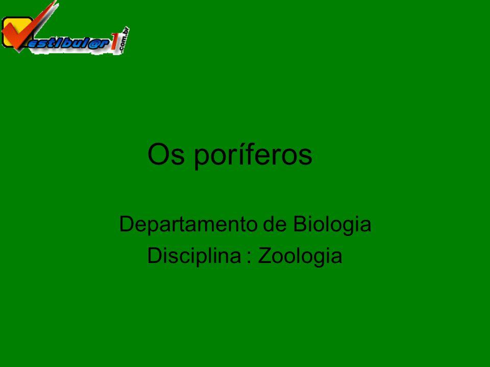 Departamento de Biologia Disciplina : Zoologia