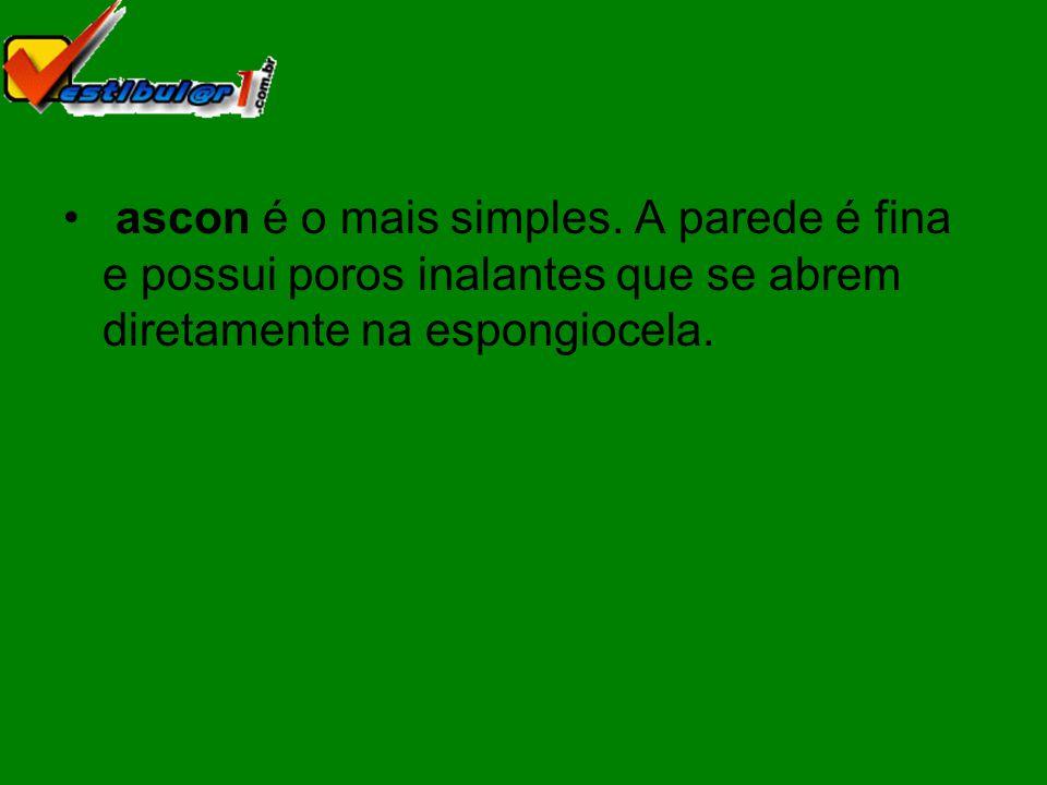ascon é o mais simples.