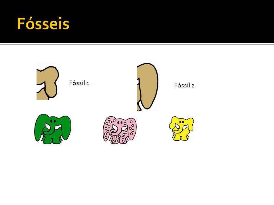 Fósseis Fóssil 1 Fóssil 2