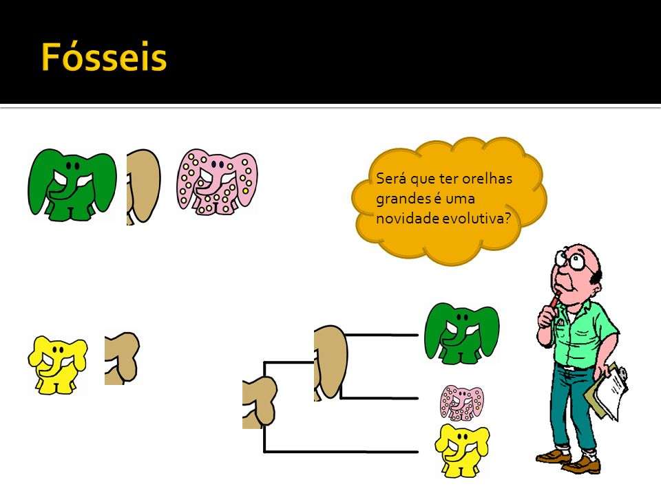 Fósseis Será que ter orelhas grandes é uma novidade evolutiva