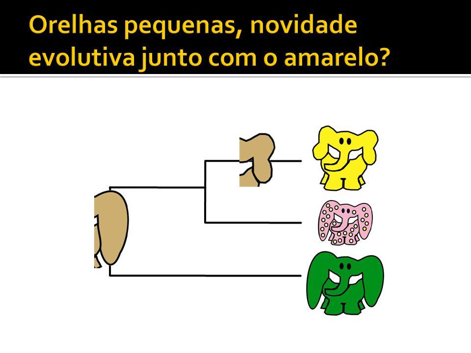 Orelhas pequenas, novidade evolutiva junto com o amarelo