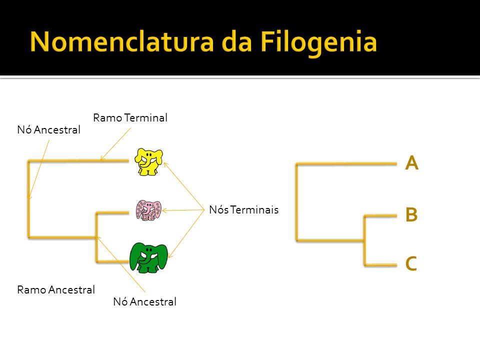 Nomenclatura da Filogenia