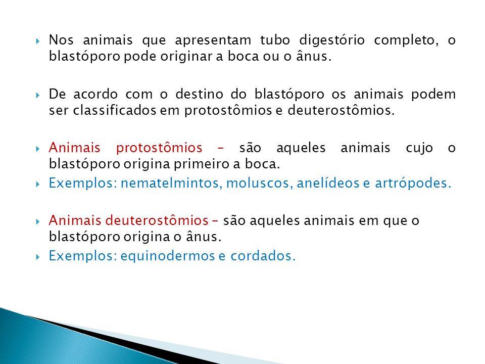 Nos animais que apresentam tubo digestório completo, o blastóporo pode originar a boca ou o ânus.