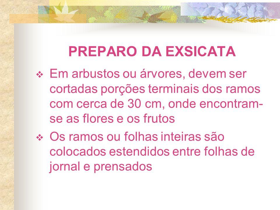 PREPARO DA EXSICATA