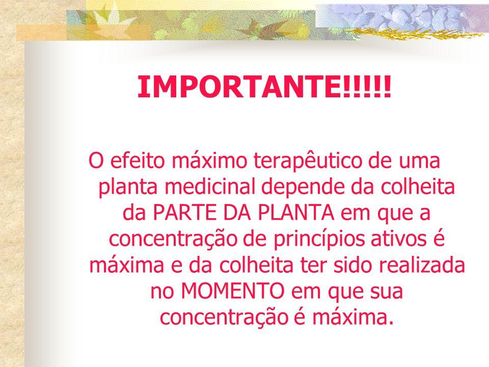 IMPORTANTE!!!!!
