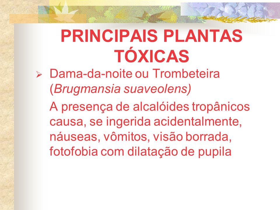 PRINCIPAIS PLANTAS TÓXICAS