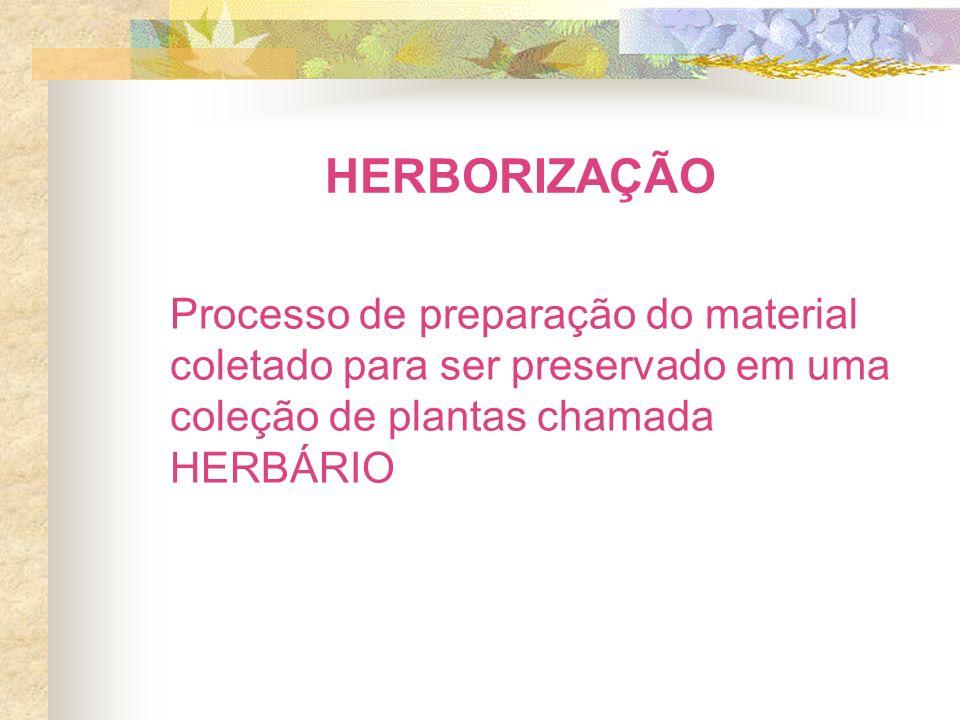 HERBORIZAÇÃO Processo de preparação do material coletado para ser preservado em uma coleção de plantas chamada HERBÁRIO.